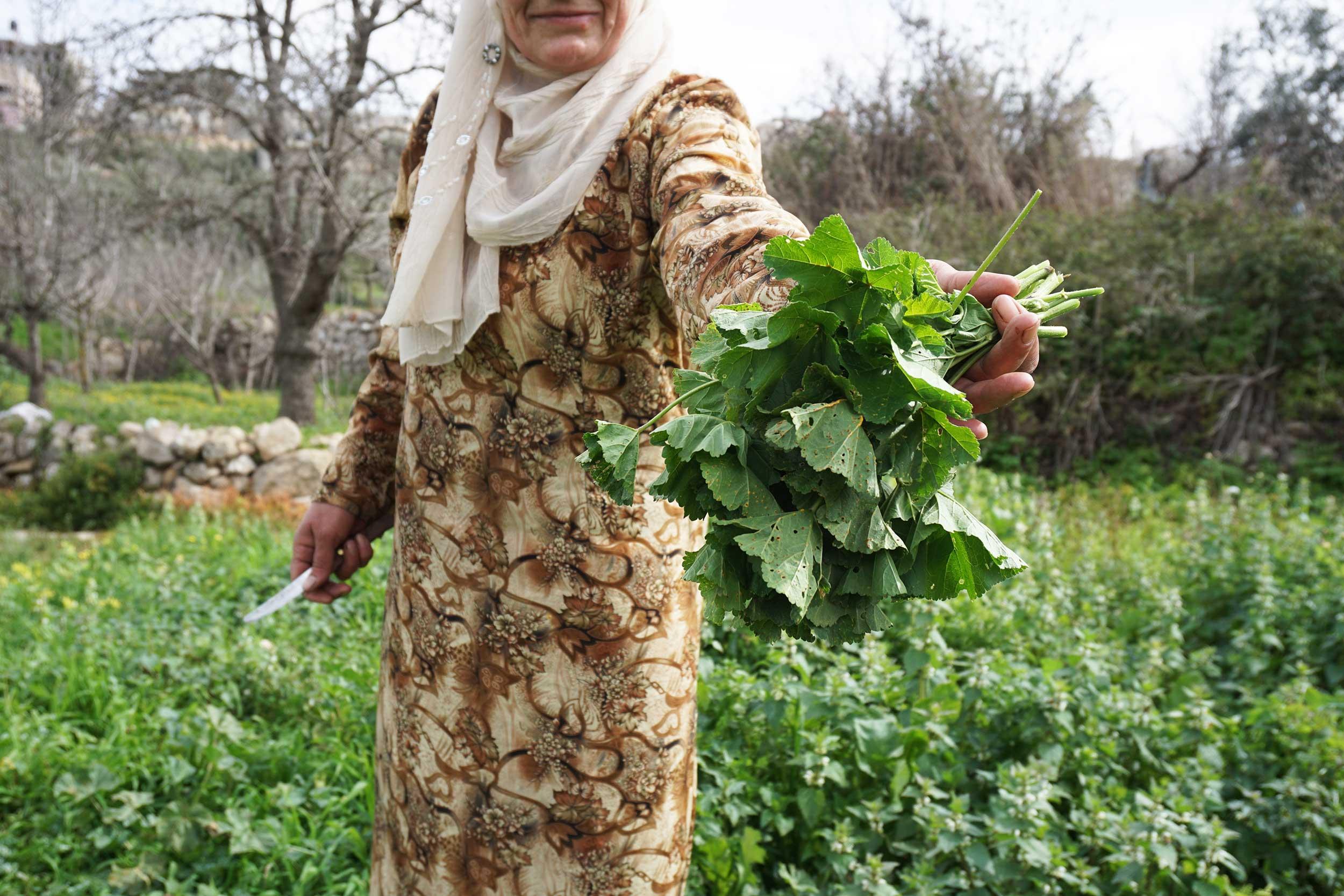 foraging palestine